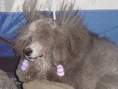 Bad hair day!!