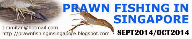 Prawn Fishing in Singapore