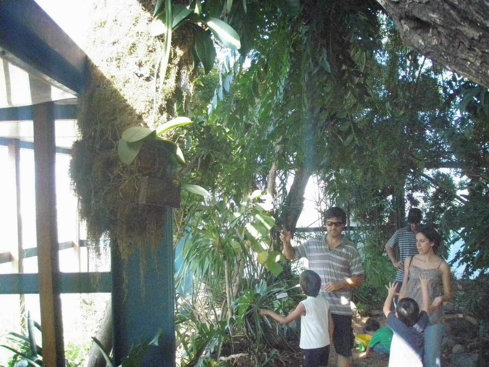 Jard n bot nico de c rdoba actividades 2013 for Actividades jardin botanico 2016