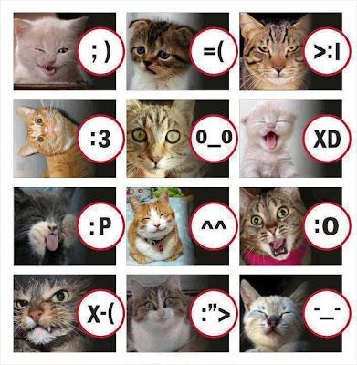Gato - Caritas
