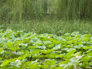 water lilies and willows  at summer palace china july 2012 by garden muses: a Toronto gardening blog