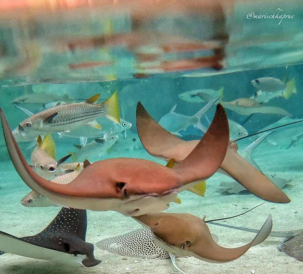 Life Is An Absurd Journey Friends With Stingray At Ray Bay