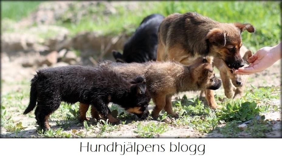 Hundhjälpens Blogg