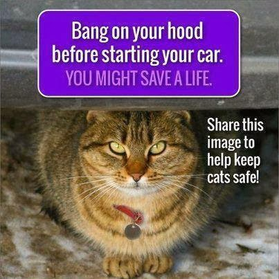 Winter Safety Tip