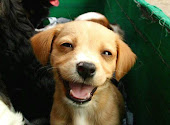 lista de canes