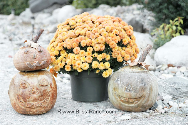 Concrete Pumpkins Bliss Ranchcom : IMG8020 from www.bliss-ranch.com size 640 x 426 jpeg 116kB