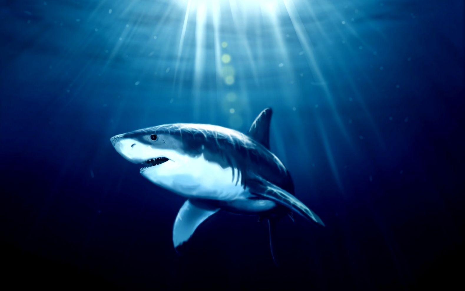 Shark Underwater   HD wallpapers
