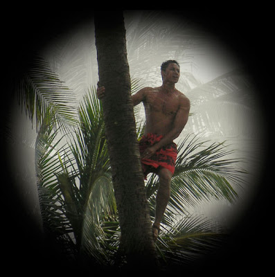 vignette around native climbing a palm tree in Hawaii