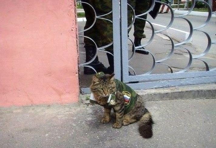 Вежливый кот 2