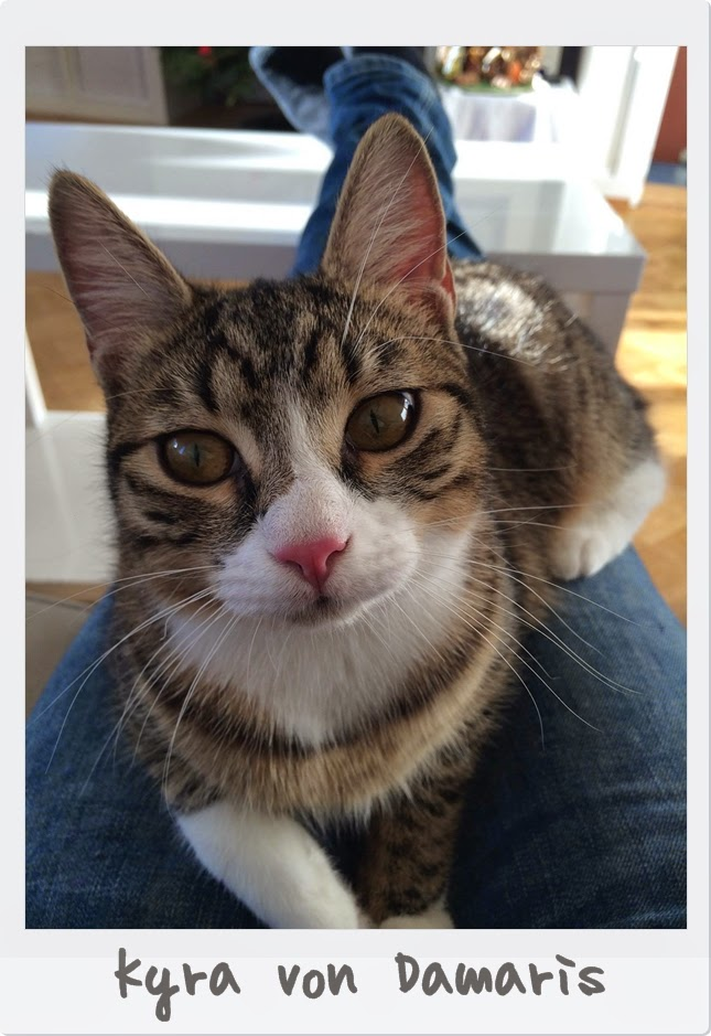 Katze-Kyra von Damaris