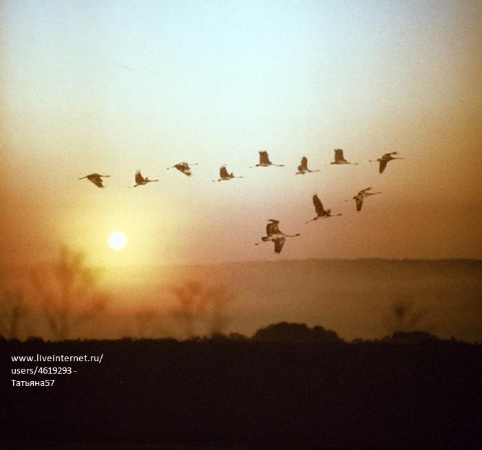 Гуси лебеди  стихи фото осень