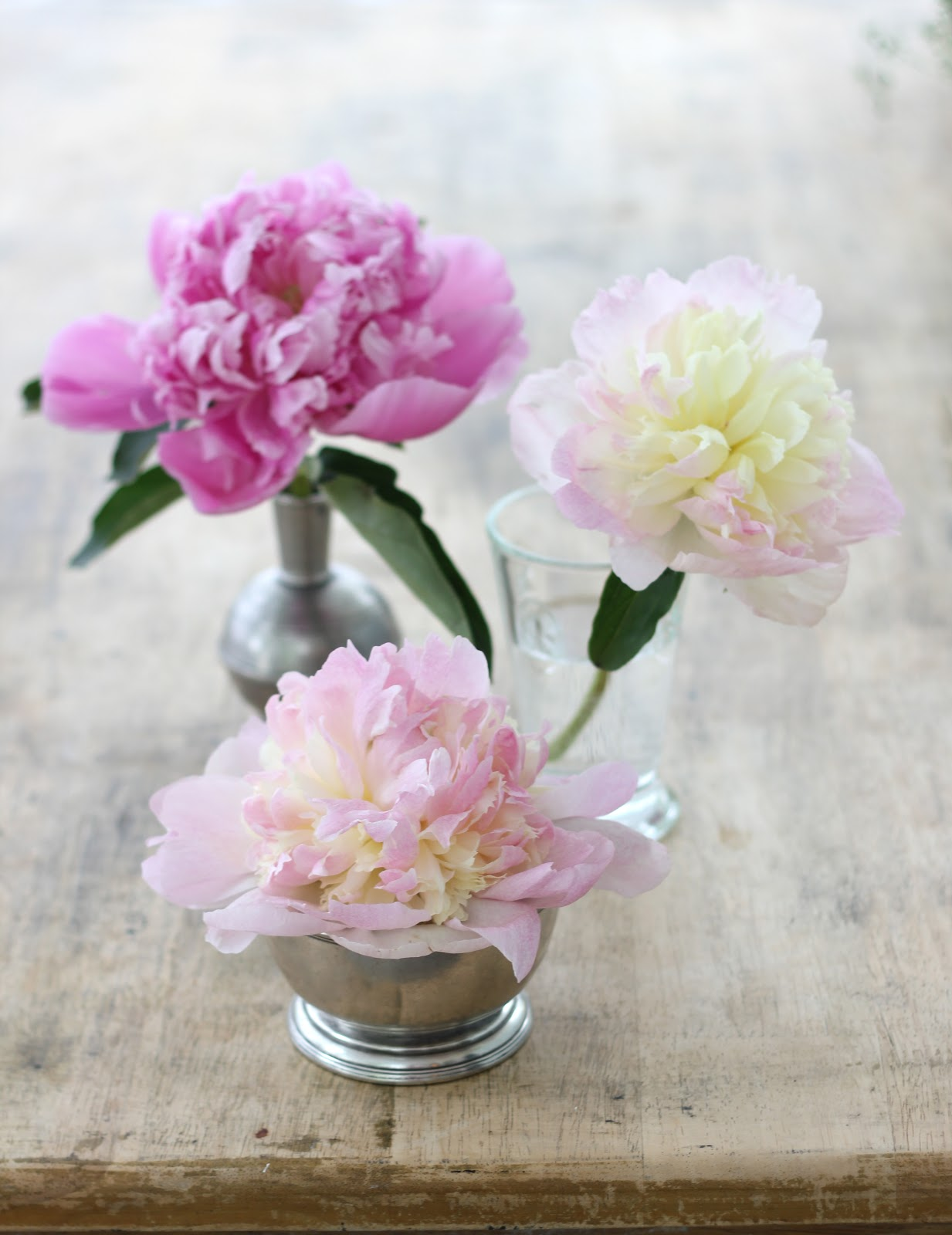 jenny steffens hobick peonies 3 ways to display individual blooms around your house
