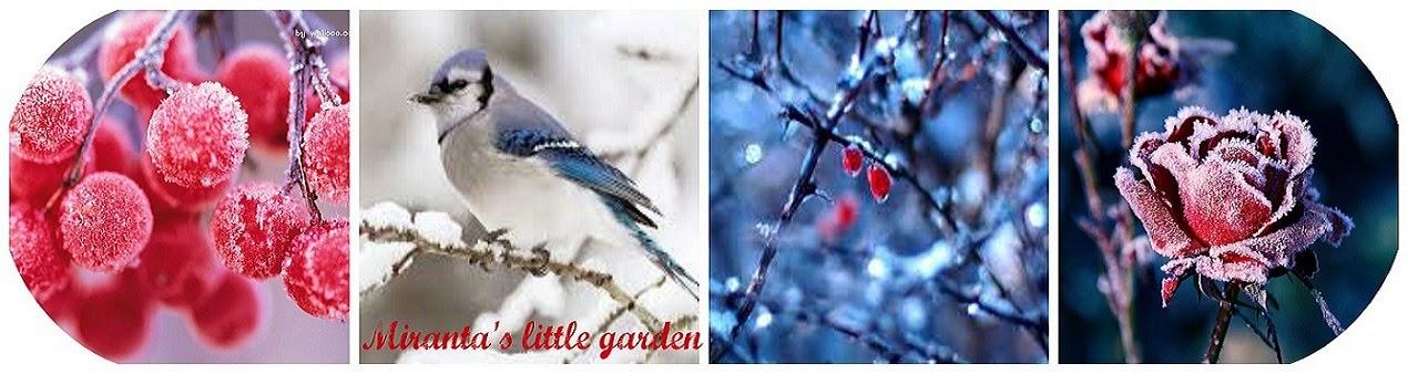 Miranta's little garden