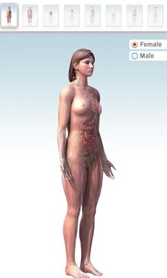vedere il corpo umano in 3D online