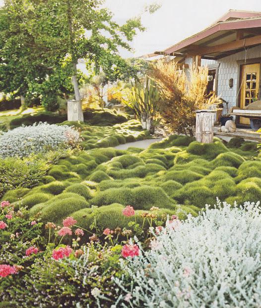 korean velvet grass thinking