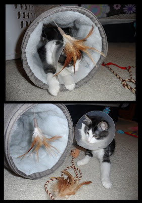 Anakin's new toys & wearing his cone