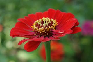 цветочный мотив