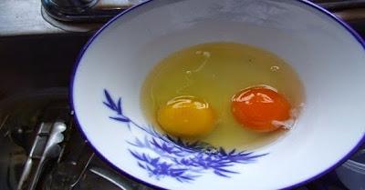 Perbedaan warna kuning telur