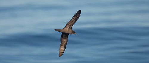 Berts Bird Blog