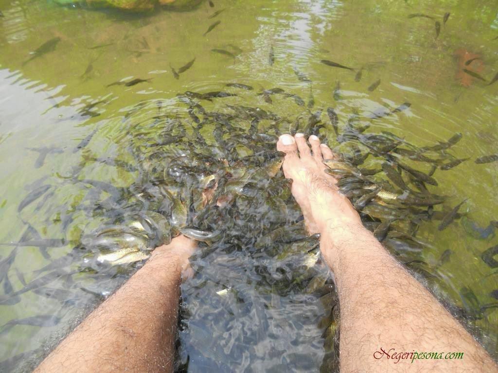 Cerita Pengalaman Melakukan Terapi Ikan
