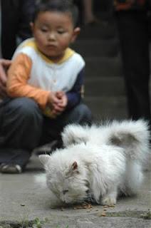 Kucing Unik Memiliki Sayap Di Tubuhnya [ www.BlogApaAja.com ]