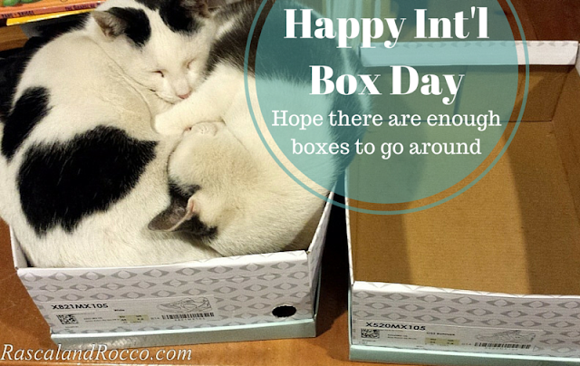 International Box Day Hope their are enough boxes! #cats #photosofcats #catsinboxes