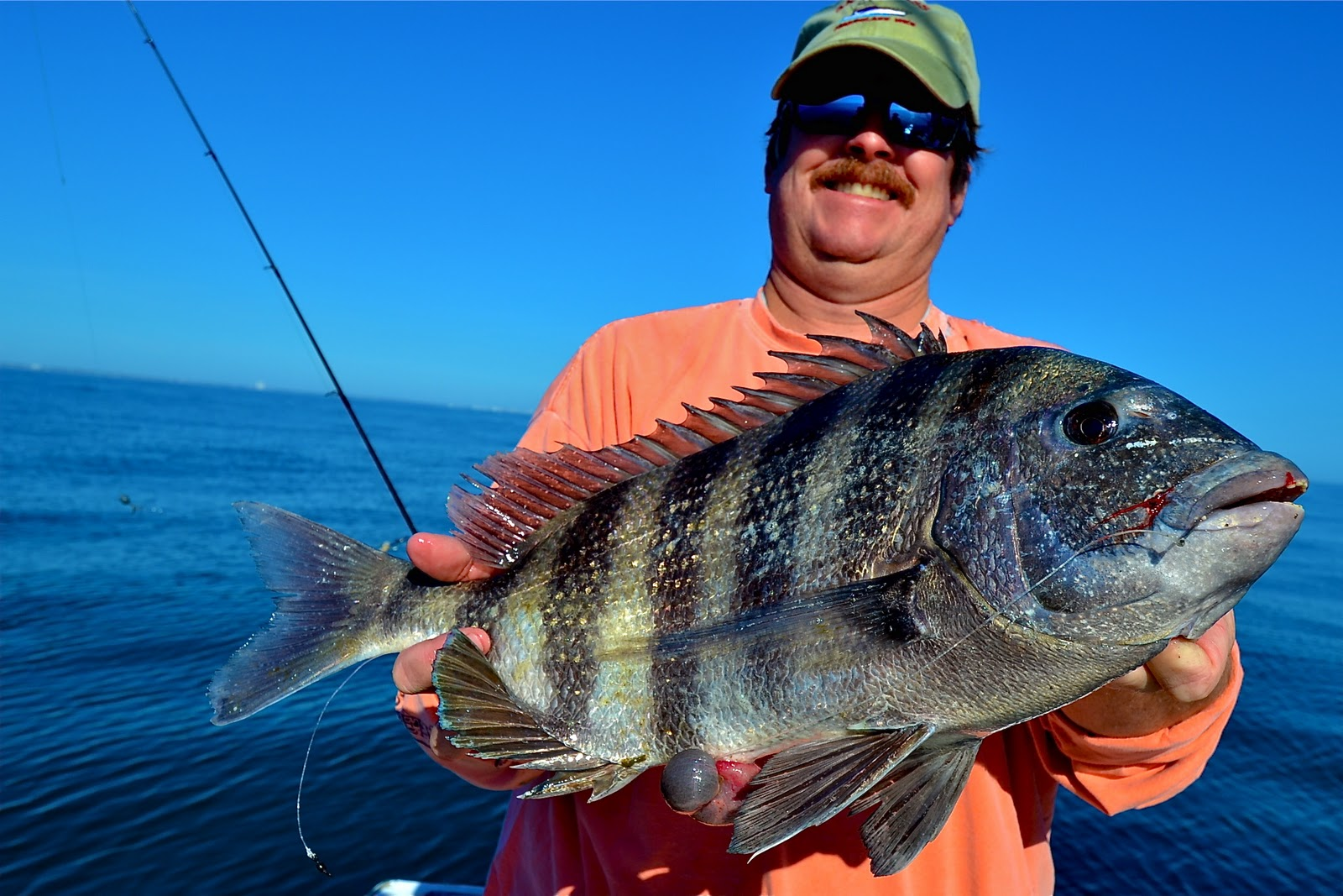 Carolina guide service sheepshead fishing murrells inlet sc for Sc saltwater fish