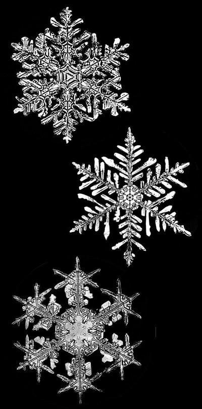 snowflake bentley snowflakes