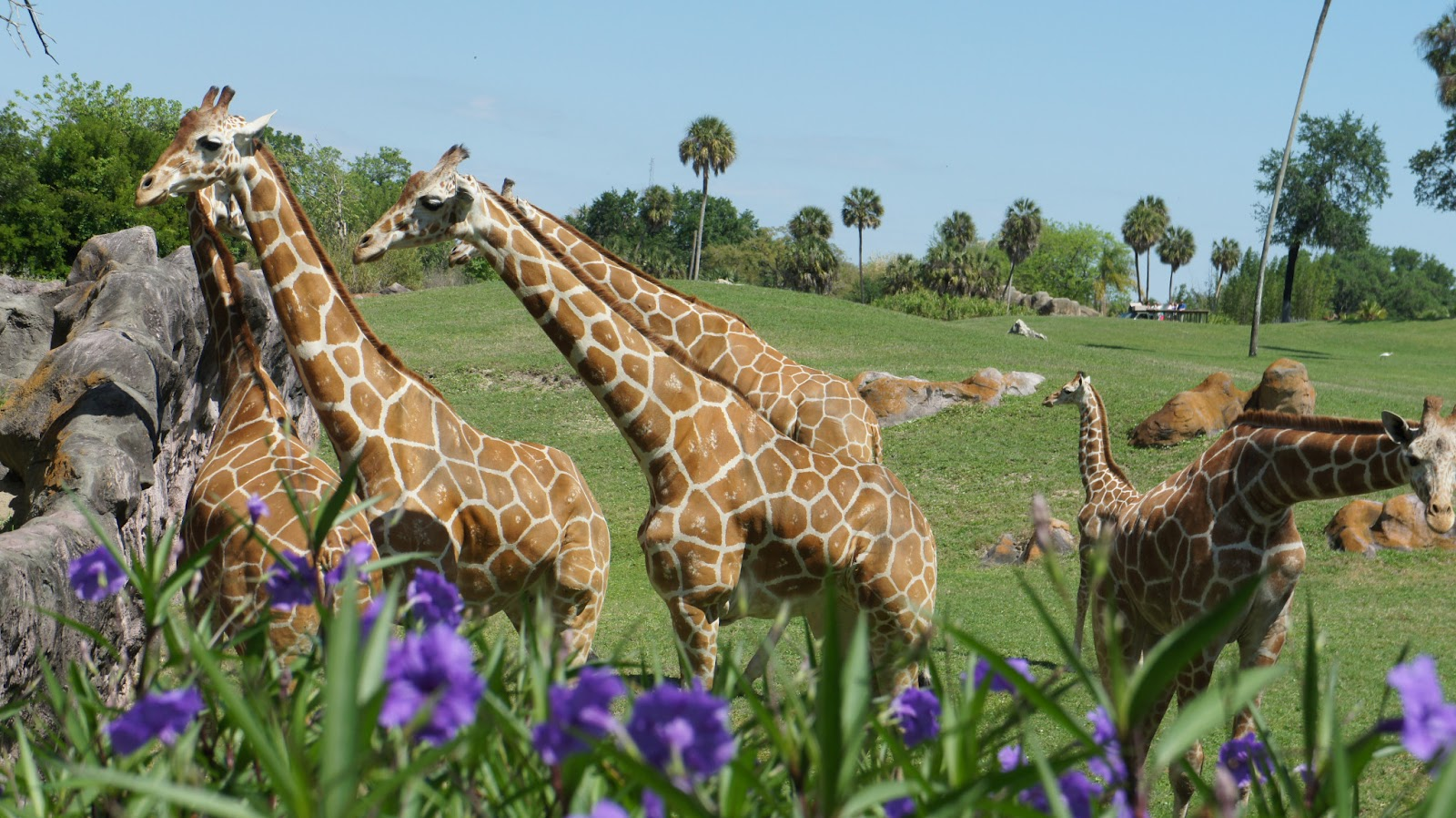 Adventures And Places Busch Gardens Tampa Florida