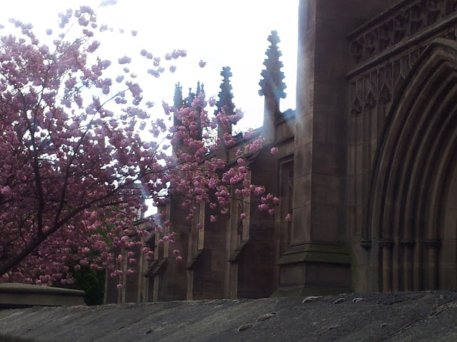 Pink flowers in front of the Leeds Minster