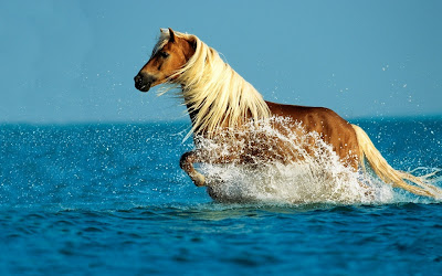 Brown Horse Running in Water Wallpaper