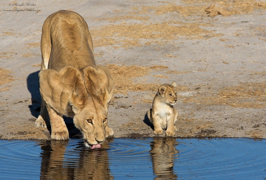 50 Powerful Photos Capture Extraordinary Moments In The Wild