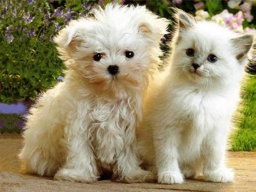 Cachorrinho e gatinho