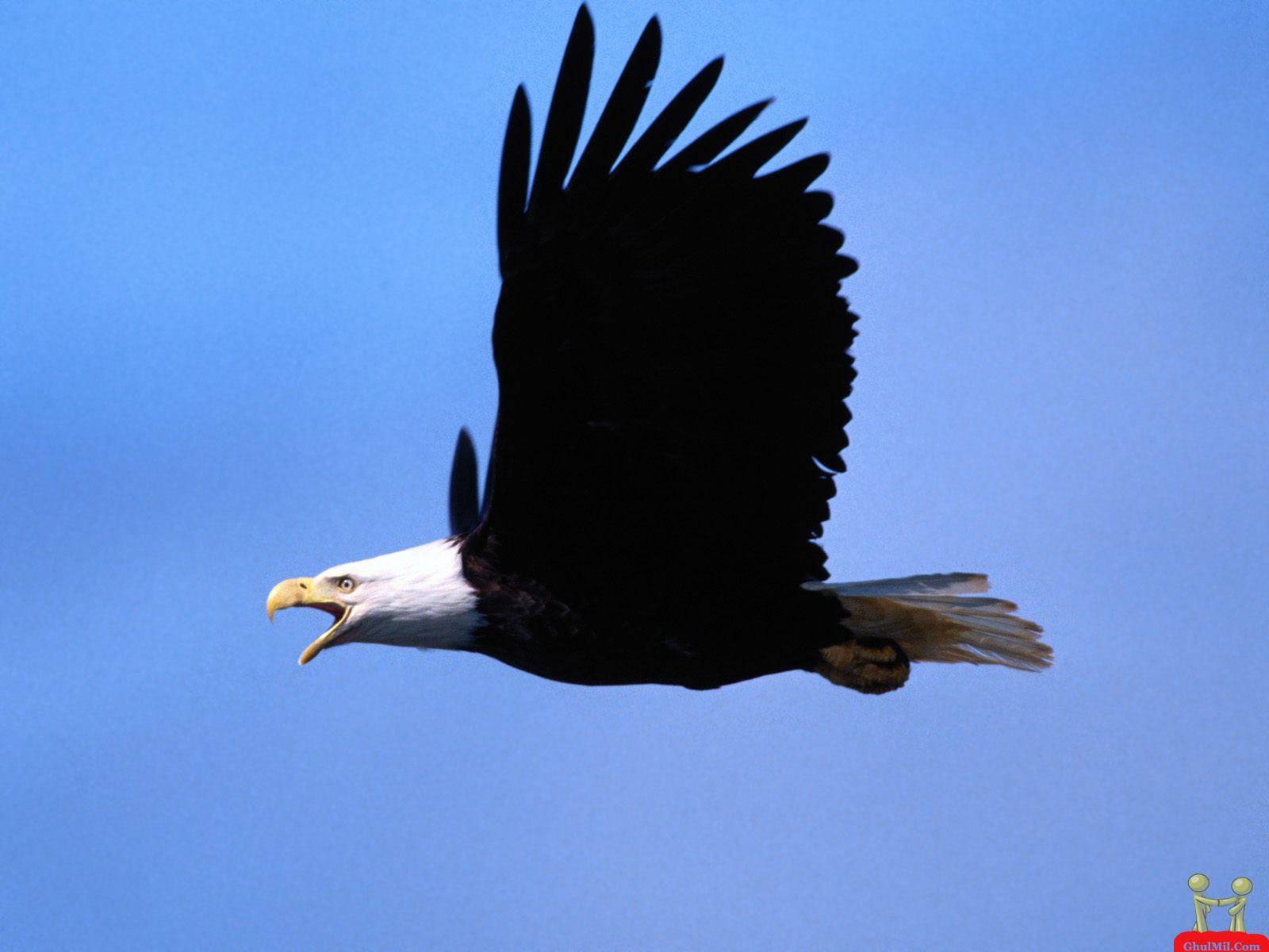http://3.bp.blogspot.com/-UDWcfJBhHWQ/TbP7Rv90otI/AAAAAAAAAAw/zCvPVyXKUNQ/s1600/amazing-beautiful-hd-wallpaper-of-flying-eagle.jpg