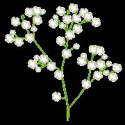 かすみ草のイラスト