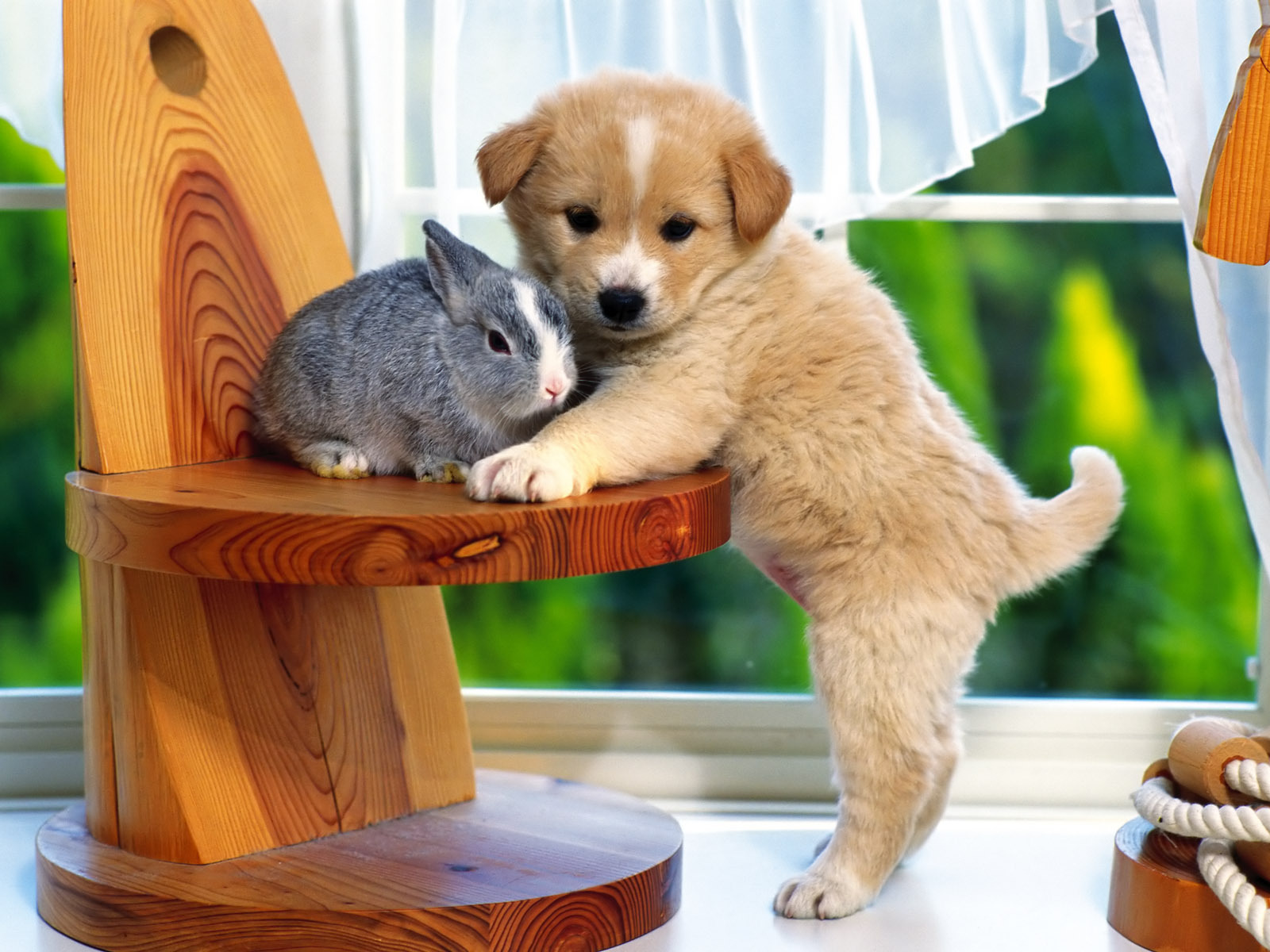 Animal zoo life puppies pics puppy pics puppies pic cute for Pictures of cute dogs
