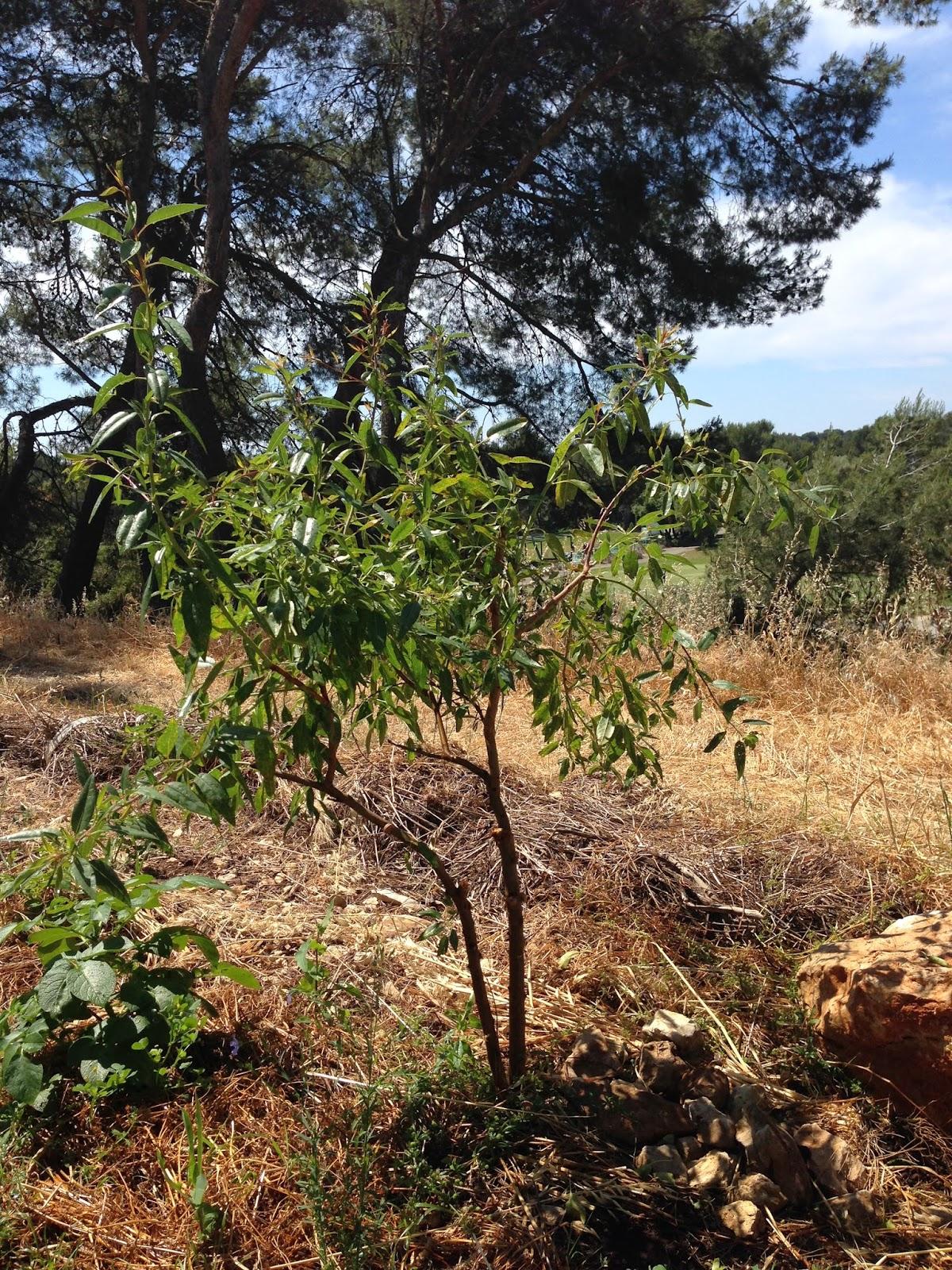 Jardin participatif innovant semons le coeur du monde gardien de semences reproductibles - Espace entre les pieds de tomates ...
