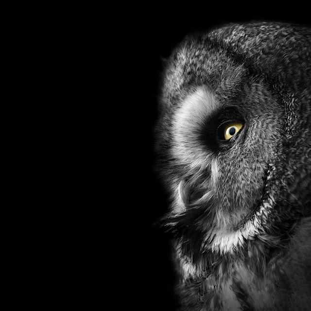 Belíssimos retratos de animais em Preto e Branco por Lukas Holas