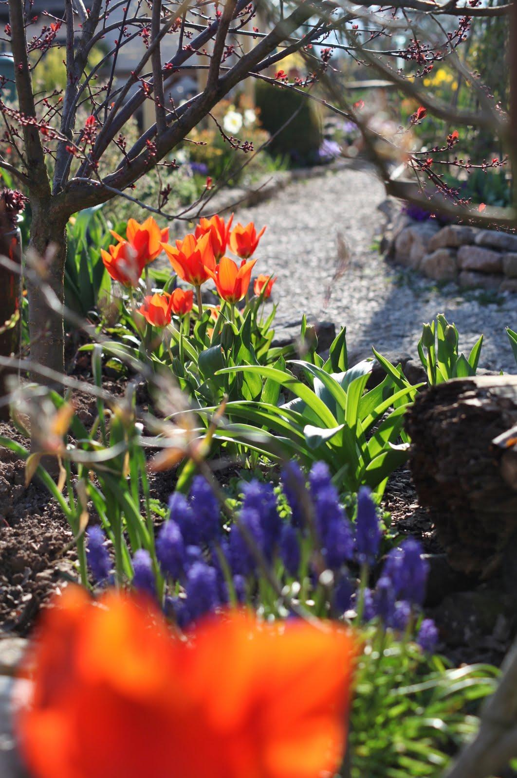Frühling|im|Garten