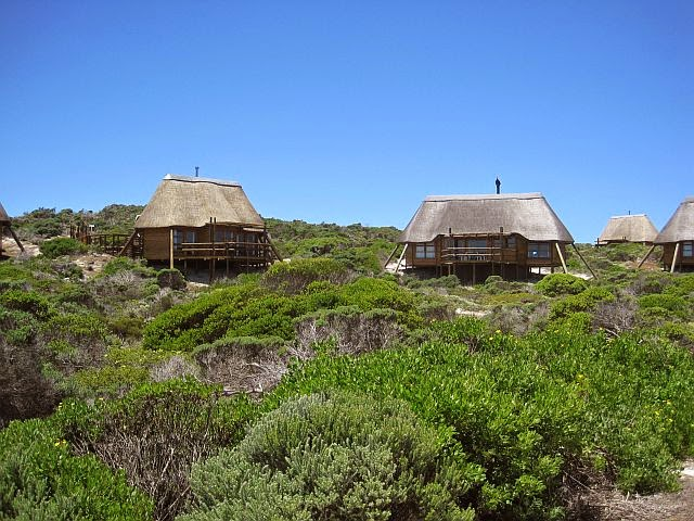 Agulhas South Africa  city photos gallery : Green Point Greenie: Agulhas National Park South Africa Part 1