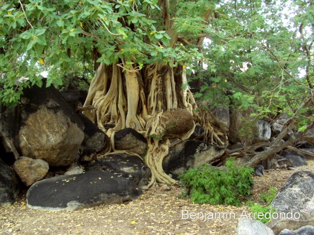 alrededor de 800 especies de árboles arbustos y trepadoras de