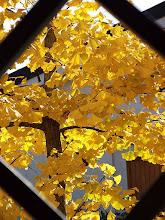 Ecco l'autunno...
