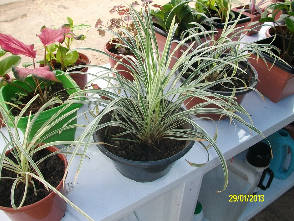 plantas e jardins ornamentais: feira de flores tropicais e plantas ornamentais na praça Deodoro