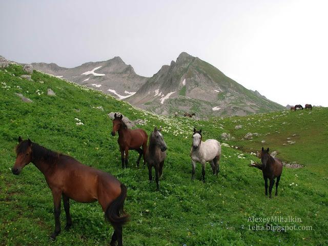 Лошади в горах Абхазии