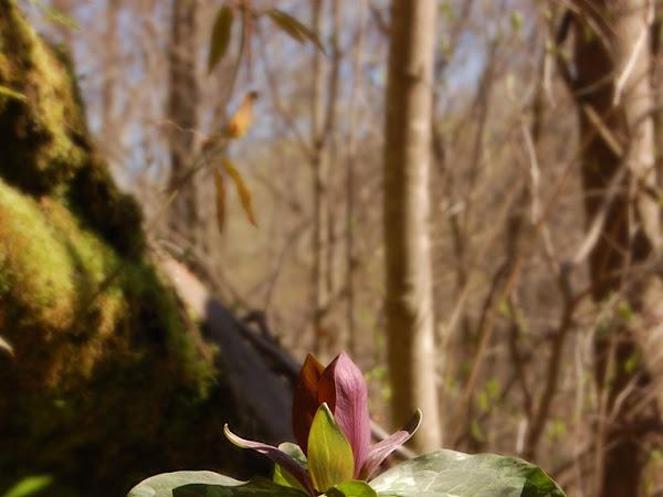 Nurture Photography - Green/Nature