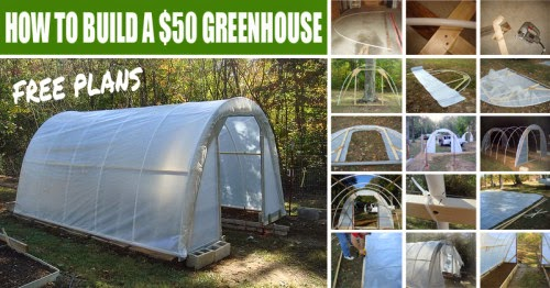 How To Build A $50 Greenhouse In Your Yard – Free Plans