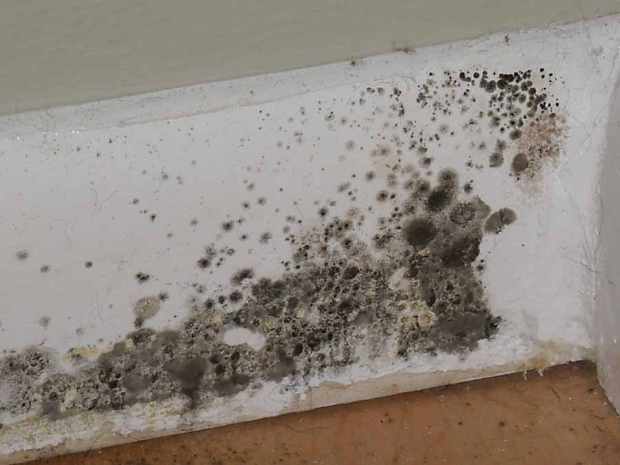 mold removal services kansas city basic of basement mold removal