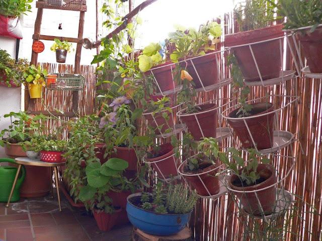 Balkon Blumen Gemüse Selbstversorger Pflanzen Innenstadt Oase Sommer Vertikaler Garten