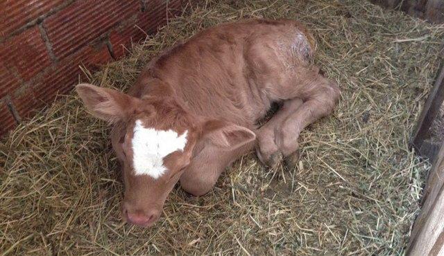 Οδηγίες της Διεύθυνσης Κτηνιατρικής της Περιφέρειας ΑΜ-Θ για την Οζώδη Δερματίτιδα των βοοειδών