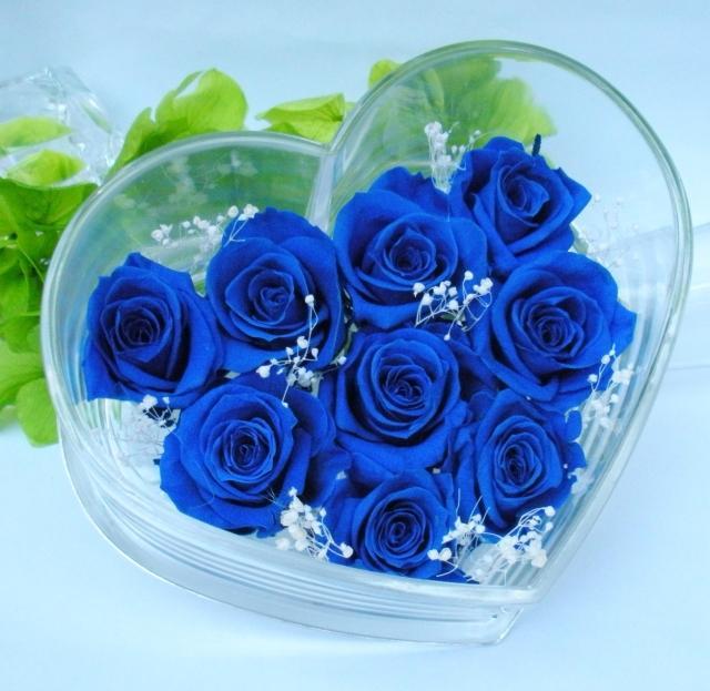 Ảnh đẹp về hoa hồng xanh